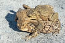 Die Kröten danken – Eigental zwei Monate gesperrt